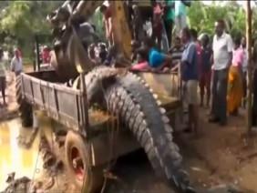 Phát hiện cá sấu quái vật nặng 1 tấn lẩn trốn trong kênh Sri Lanka