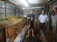 Cà Mau: Chốn bưng biền nuôi loài cầy vòi, bán 7 triệu đồng/cặp